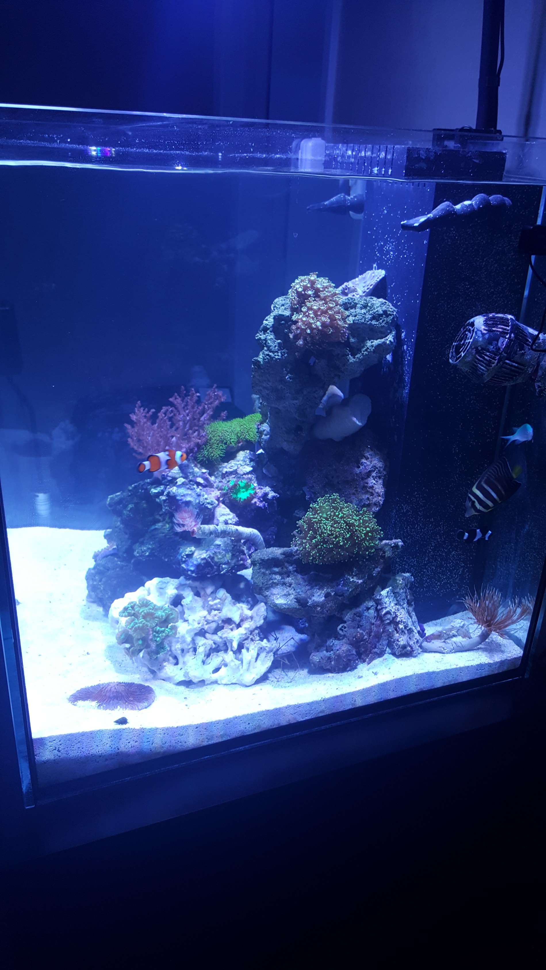 My first saltwater tank 60 gallon cube rimless Aquarium Journals