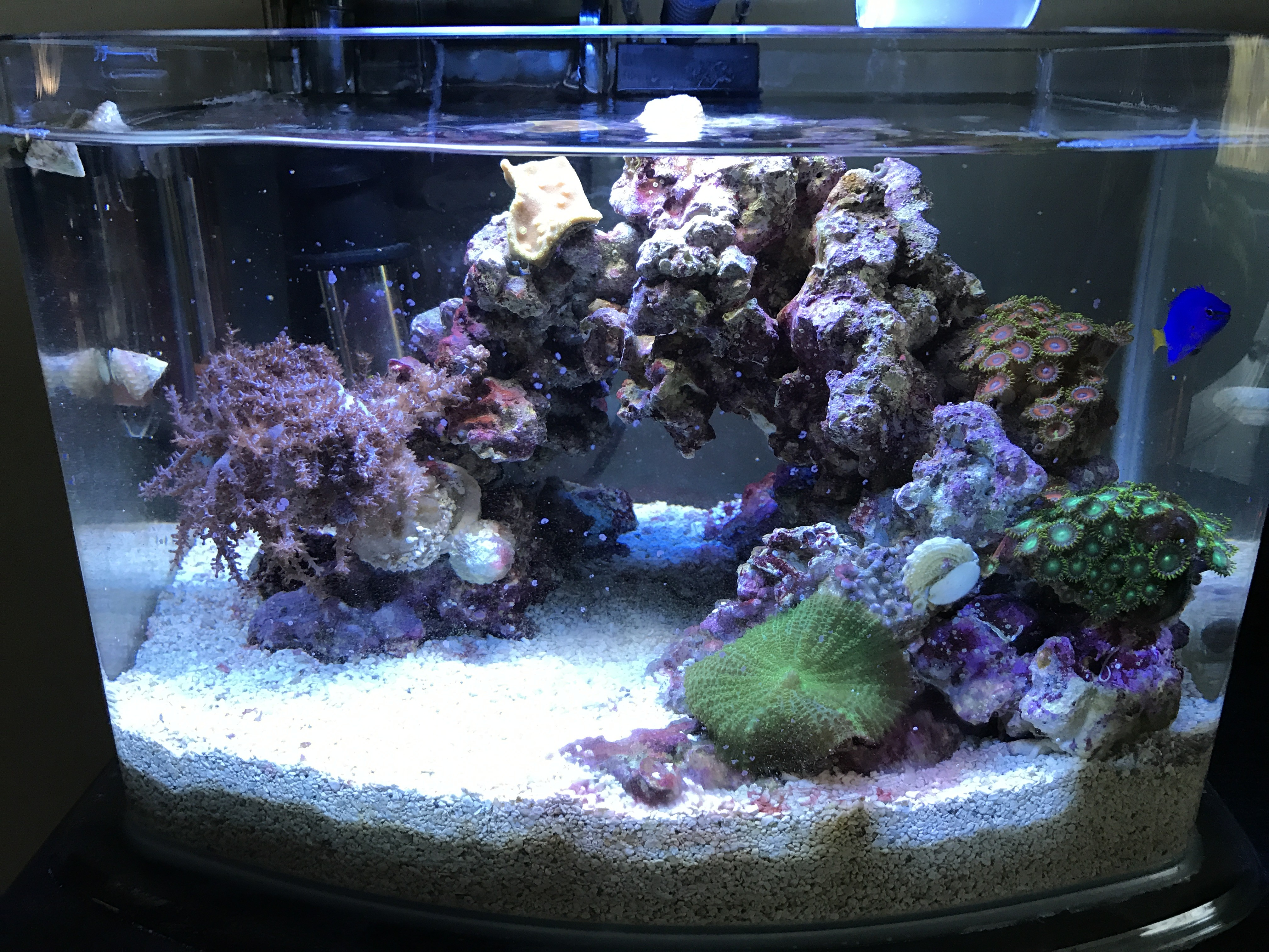 3 Gallon Picotope!- GAPING CLAM?? - Beginners Discussion - Nano-Reef ...