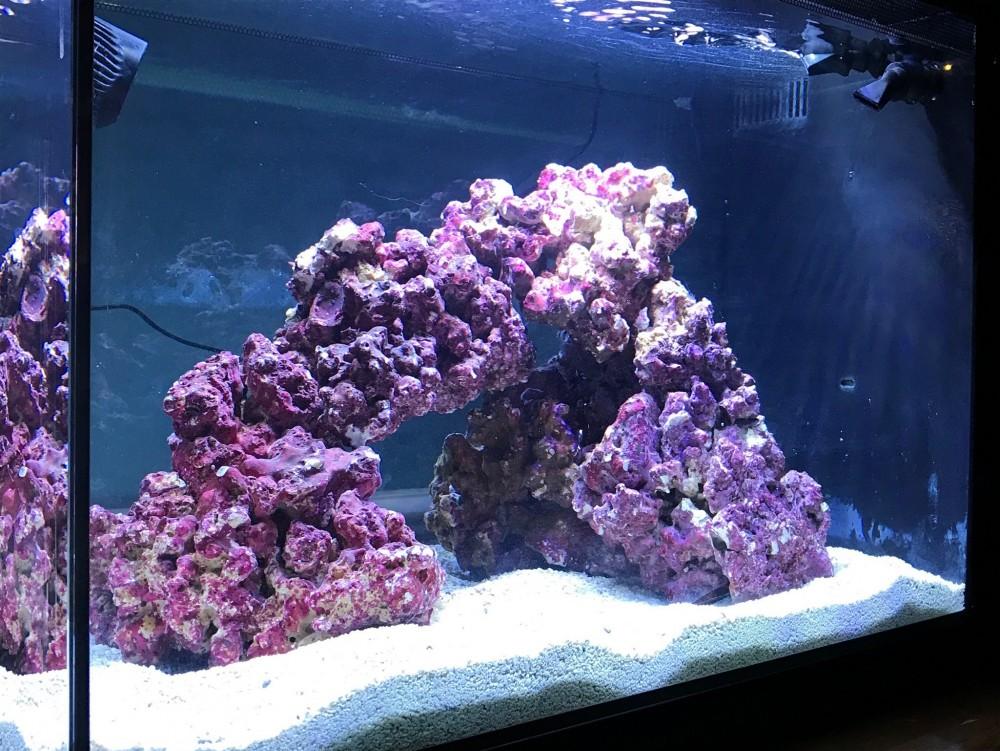 First Saltwater Tank Aquascape - Aquascaping Forum - Nano ...