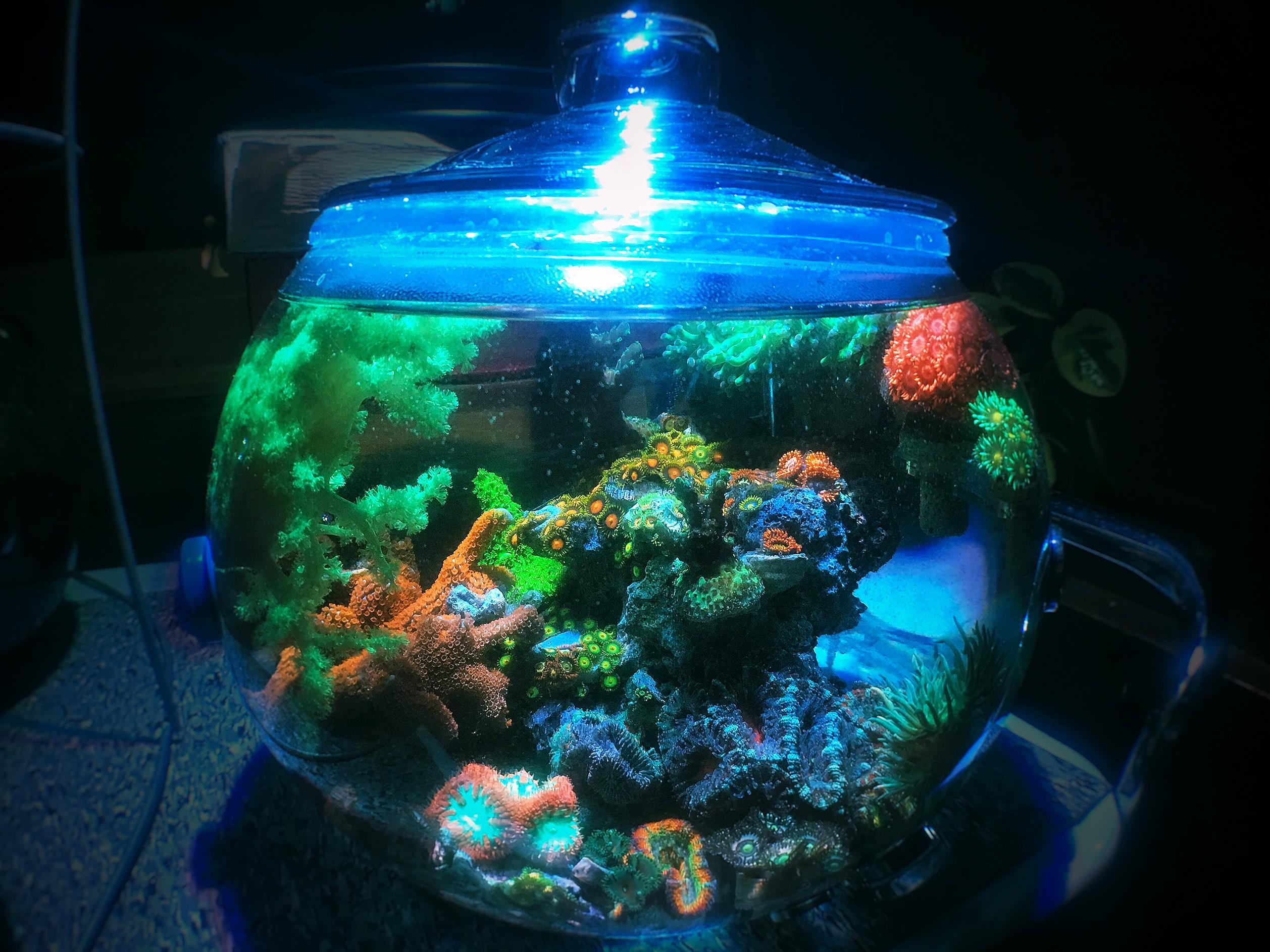 Natalia La Loca S 1 75 Gallon Glass Pico Reef Bowl April