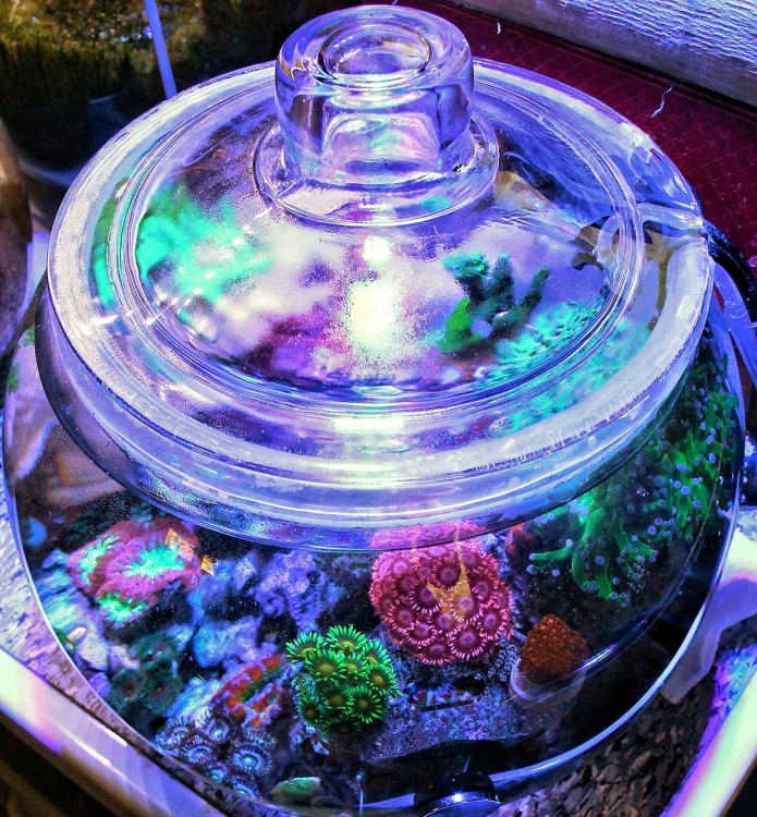 reefbowl_current_lid_20170319.jpg