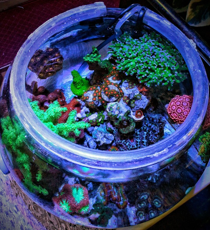 reefbowl_current_nolid_20170319.jpg