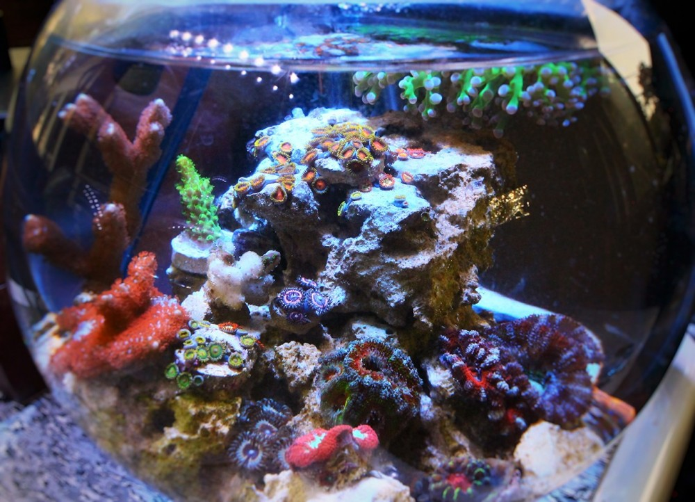 reefbowl_recovered_20160516.jpg