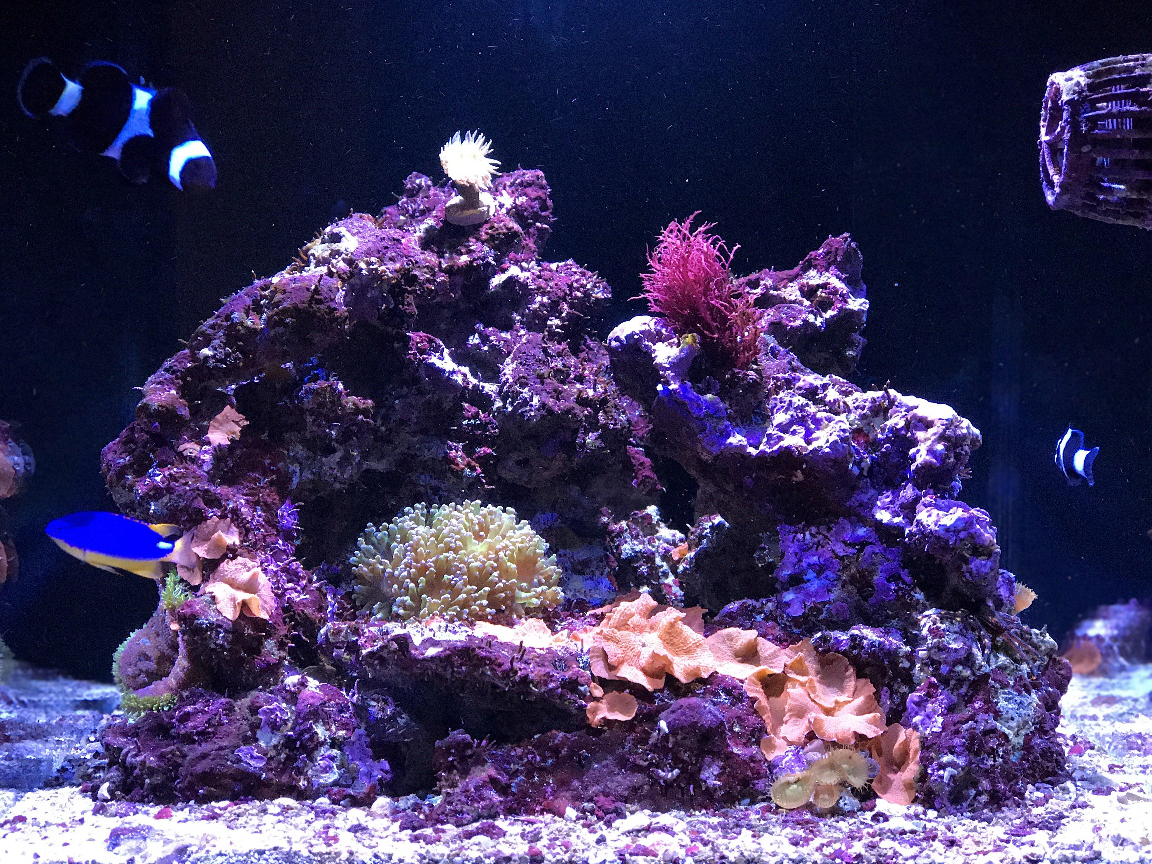Re Aquascaping My Reefer Nano Aquascaping Forum Nano Reef Community
