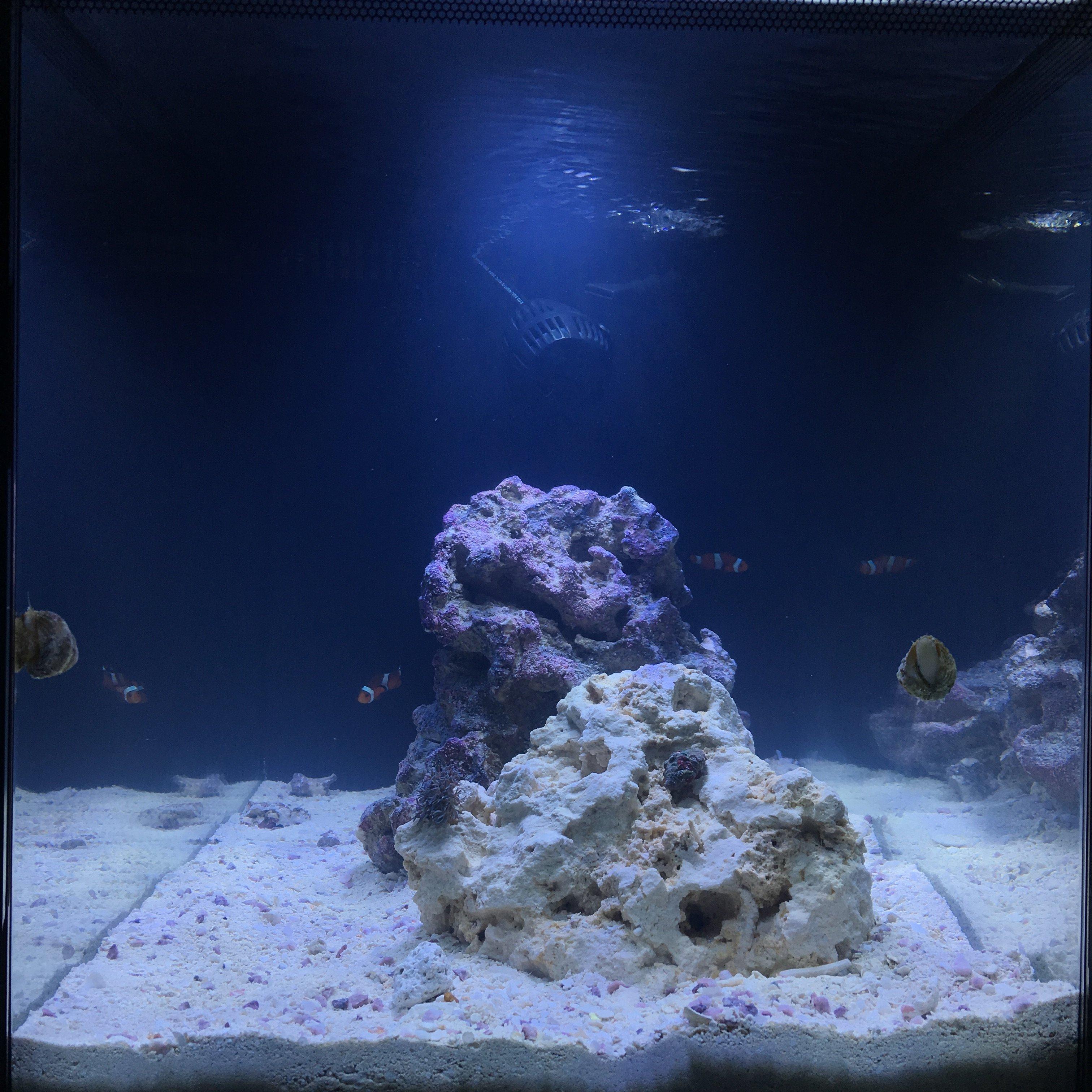 1st Marine Reef EVO stock question on pg 13 Page 2 Aquarium