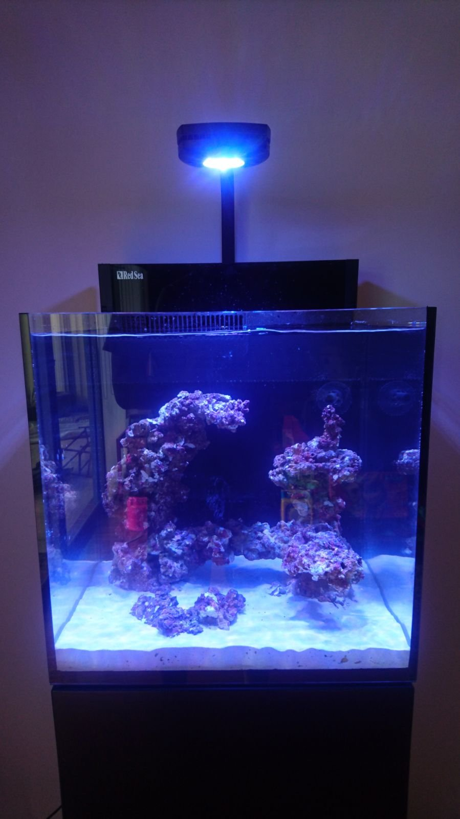 My Red Sea Max Nano Beginners Discussion Nano Reef Com Community