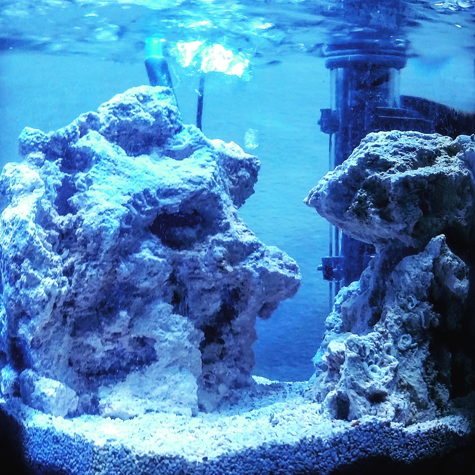 The Fools Reef 2 gal cookie jar photo dump Pico Reefs Nano