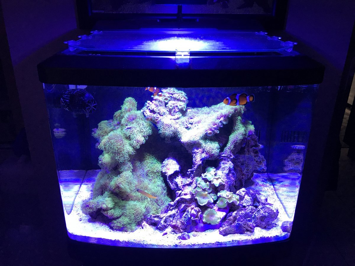 Biocube 32 Flow Ideas General Discussion Nano Reef