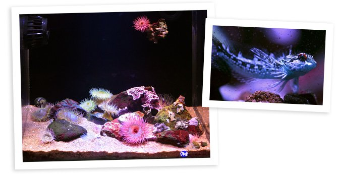 Tamberav's 7 Gallon Nano Reef