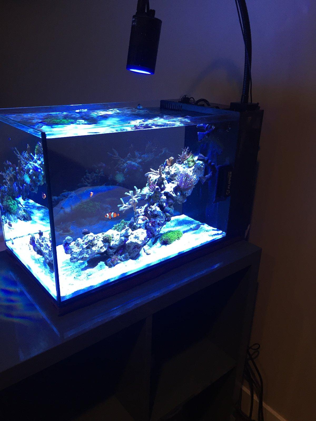 Fluval EVO 13 5 Lighting Lighting Forum Nano Reef munity