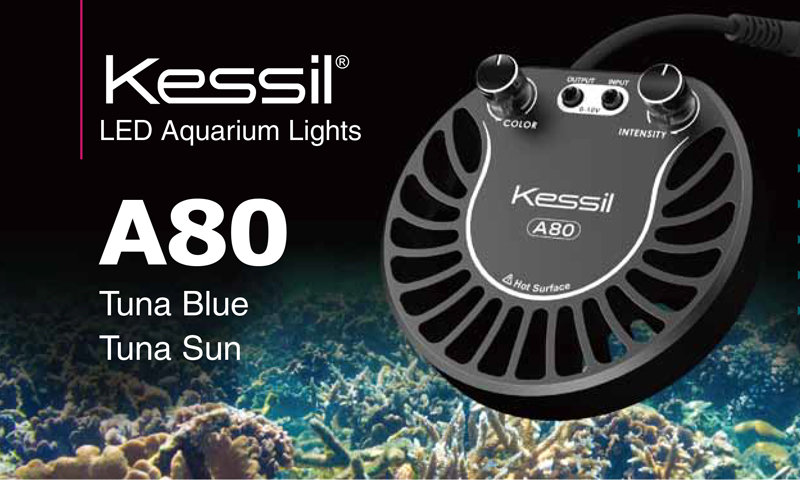 kessil-a80-led-tuna-blue-sun (1).jpg