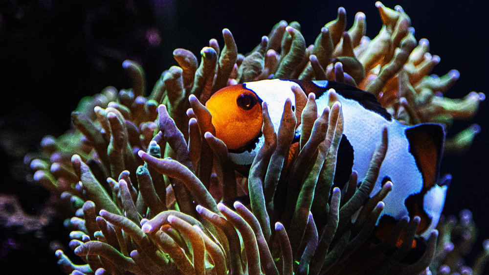 FullMoonCrater_Clownfish.jpg