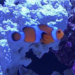 my first reef tank waterbox aio 20g cube aquarium journals nano