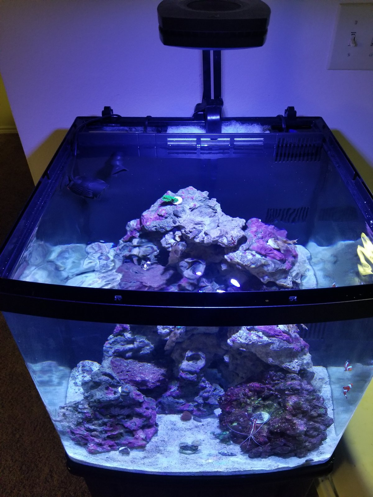 63a523047af80 Glass or acrylic lid for open top tank  - DIY Projects - Nano-Reef ...