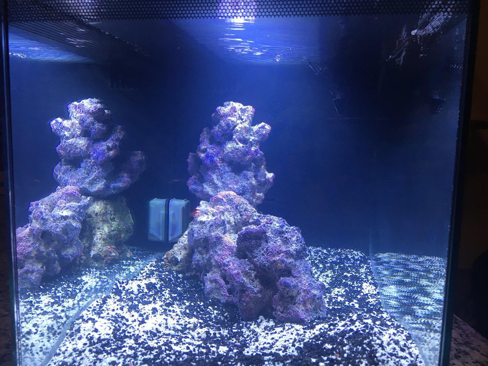 Smitten4Witten s Fluval Evo 13 5 Aquarium Journals Nano Reef