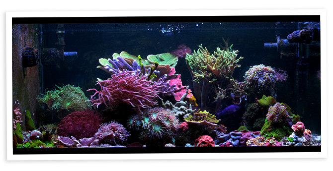 markalot's 40 Gallon Nano Reef