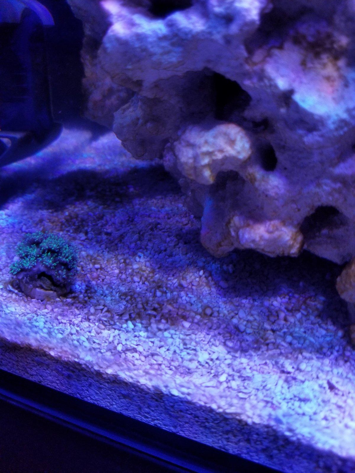30l build aquarium journals nano reef com community