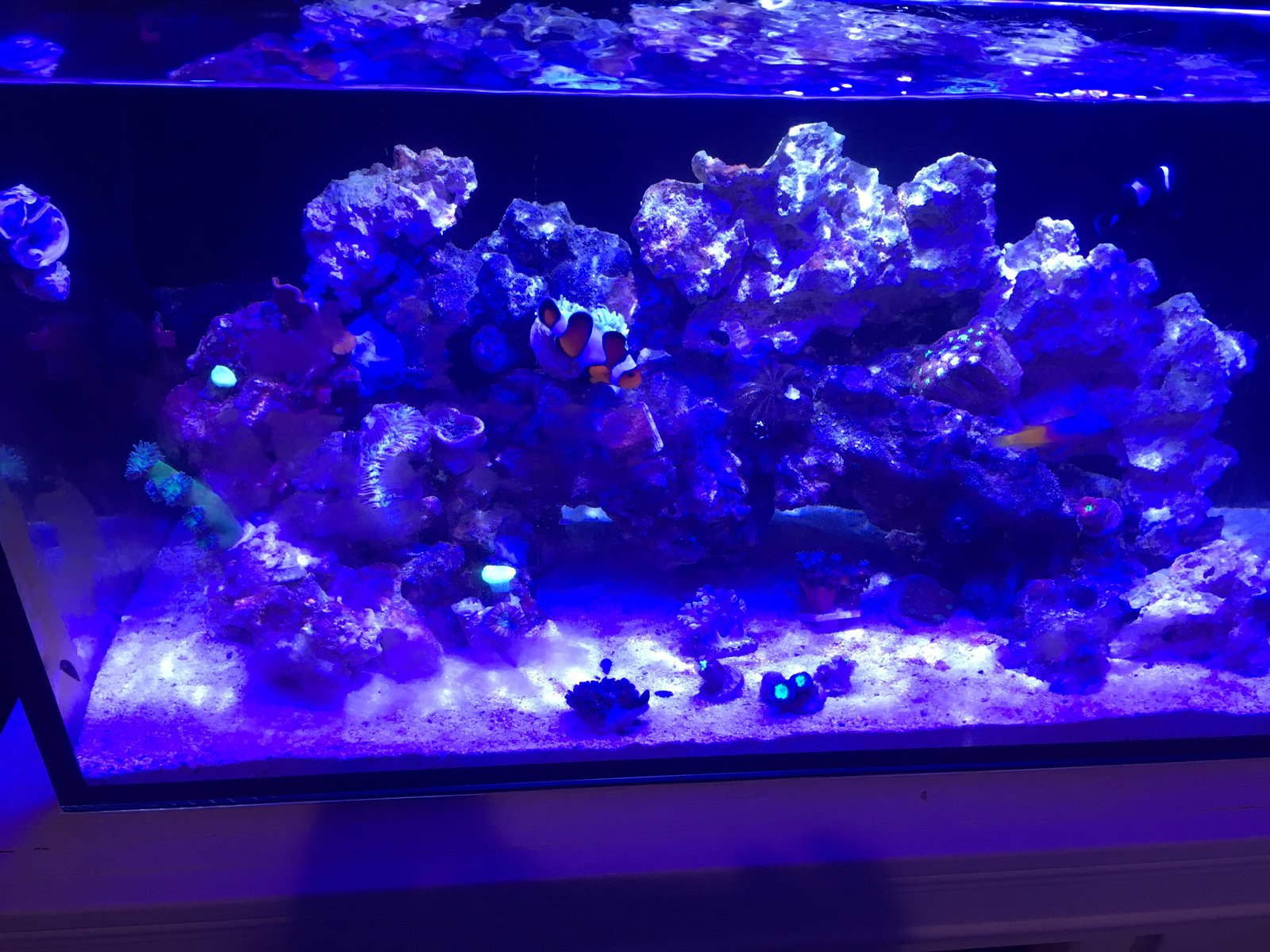 I m about to give up on my tank Beginners Discussion Nano Reef