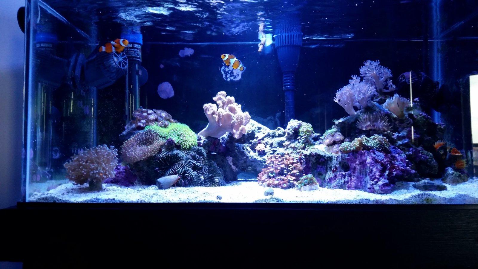 Need Inspiration For 36 Gallon Aquascape Aquascaping Forum Nano Reef Community