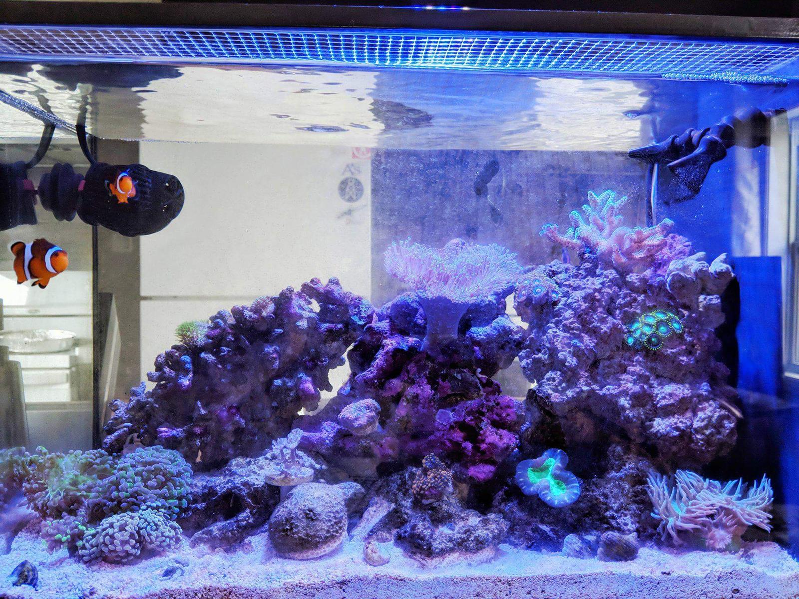 high po4 water chemistry nano reef com community