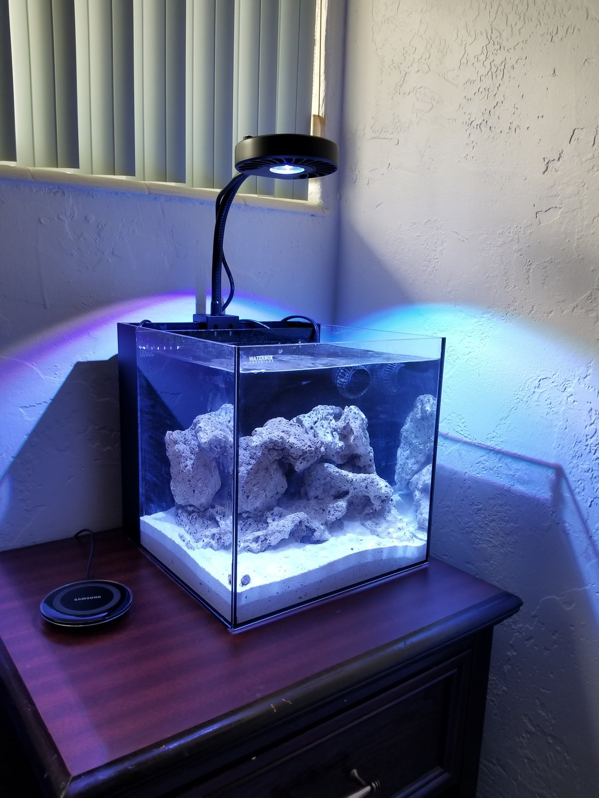 Raindog S 7g Waterbox Aquarium Journals Nano Reef Com