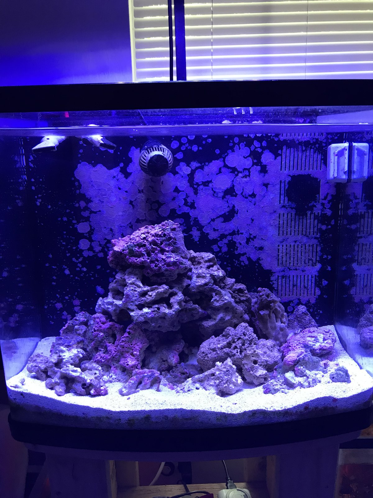 Bought Biocube off of Craigslist   Help - Beginners