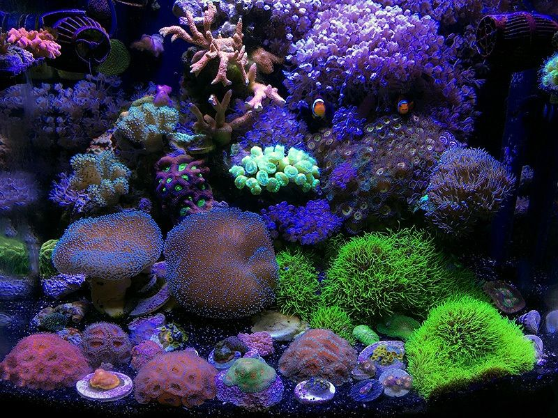 April 2018 Featured Reef