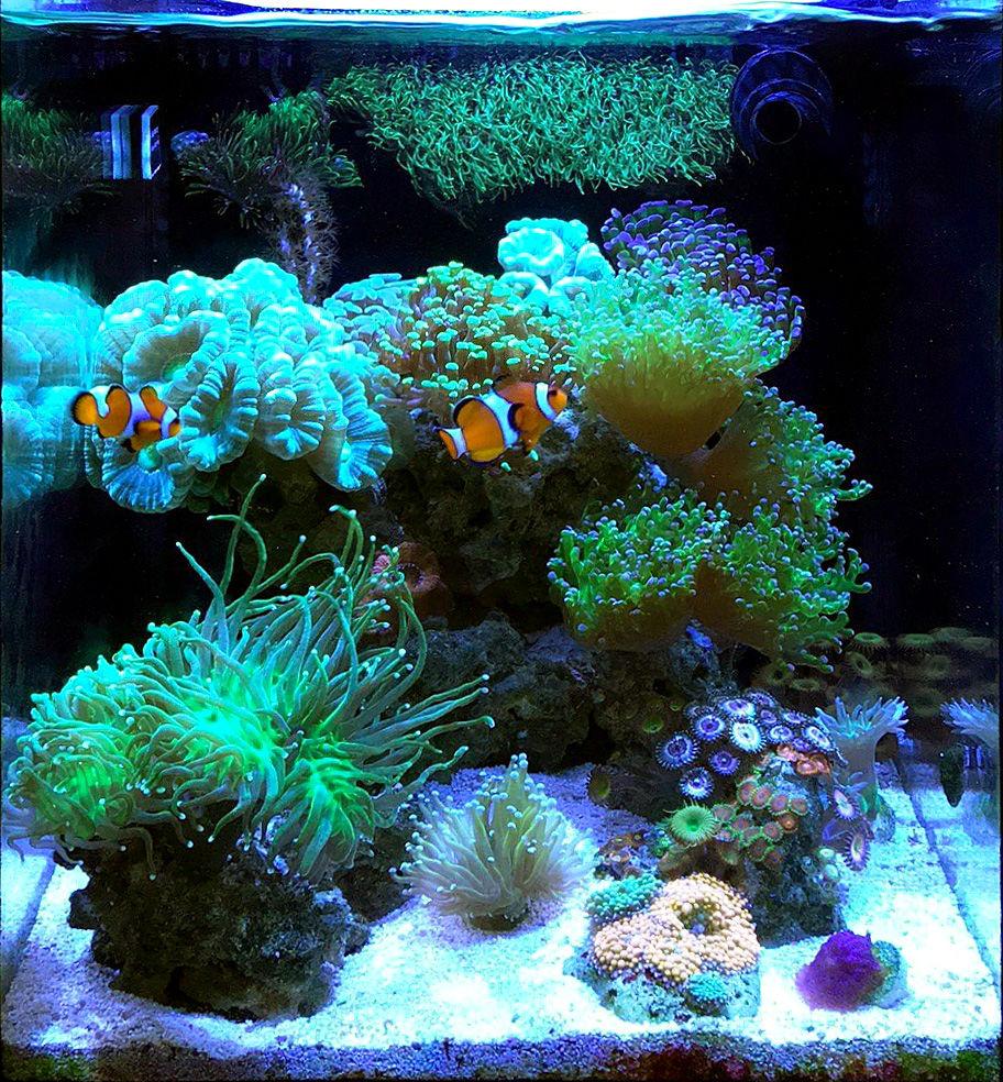 Surveyman46123 S Im 10 Nuvo Fusion Nano Reef Aquarium May 2018