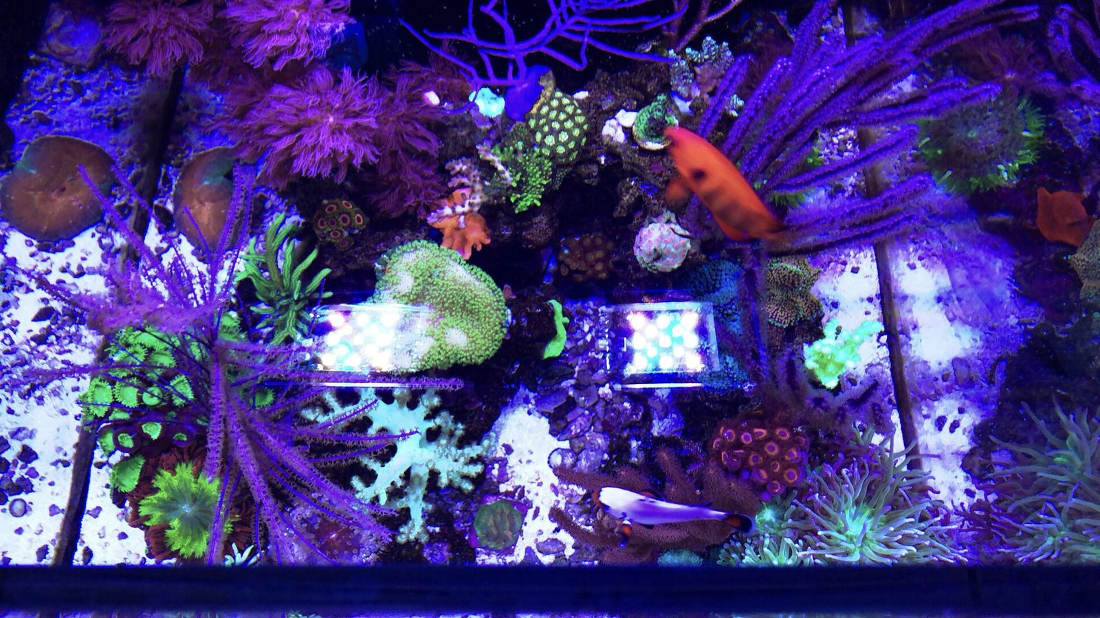 My Red Sea Reefer