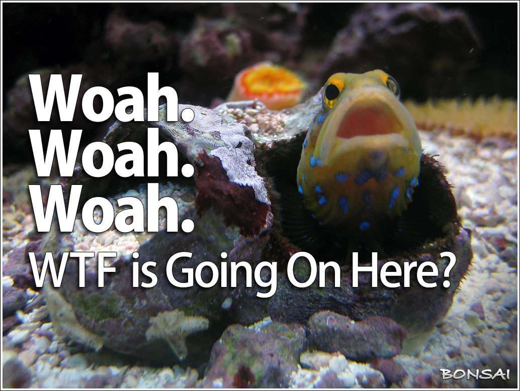 Seriously Concerned Blue Spotted Jawfish
