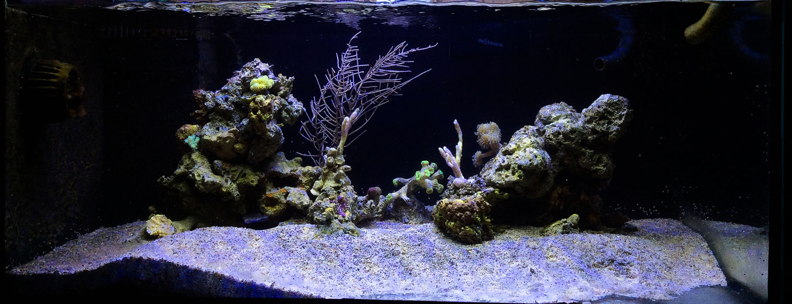 FTS Norway Reef - Vacation Reef