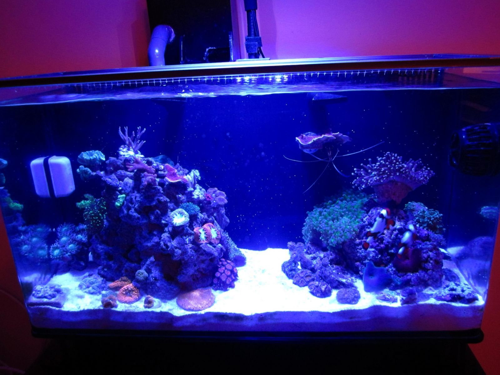 Nuvo 16 mixed reef
