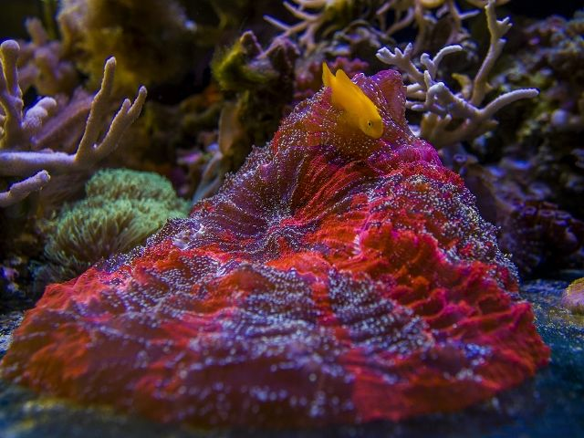 10 15 meat coral And Ycg (640x480)
