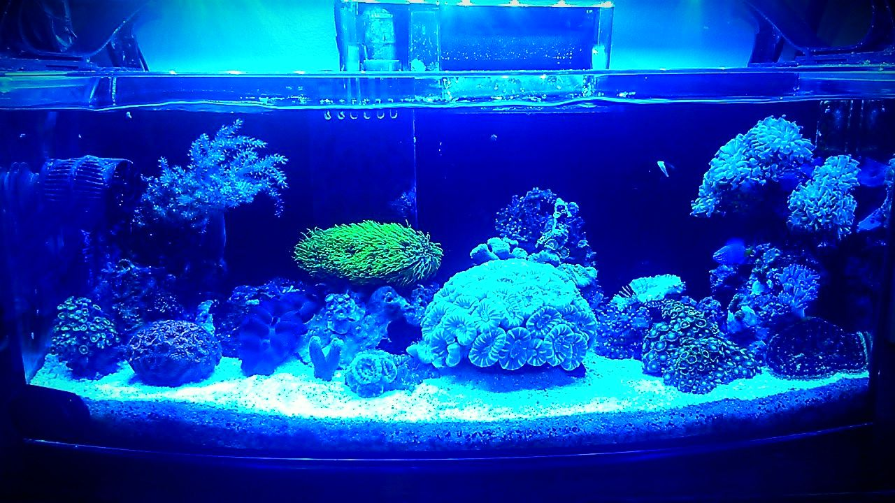 My nano reef 6g will be 1 year old next month