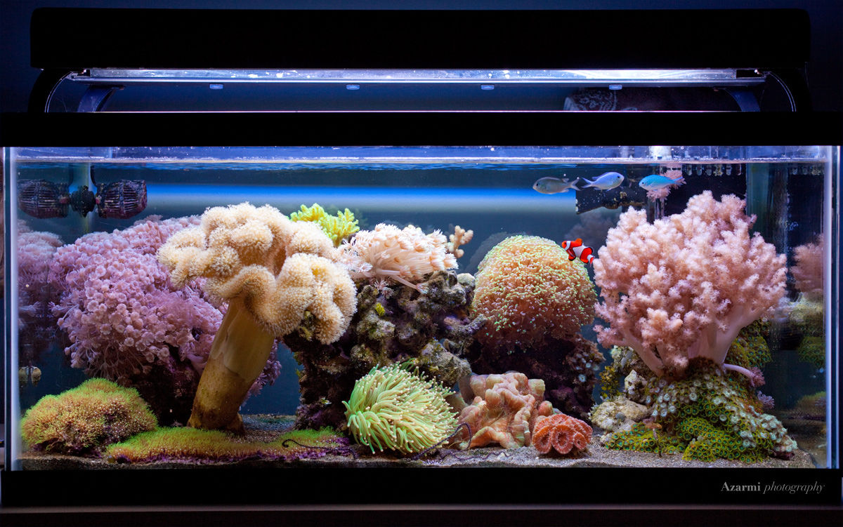 40G Soft Coral Reef Aquarium