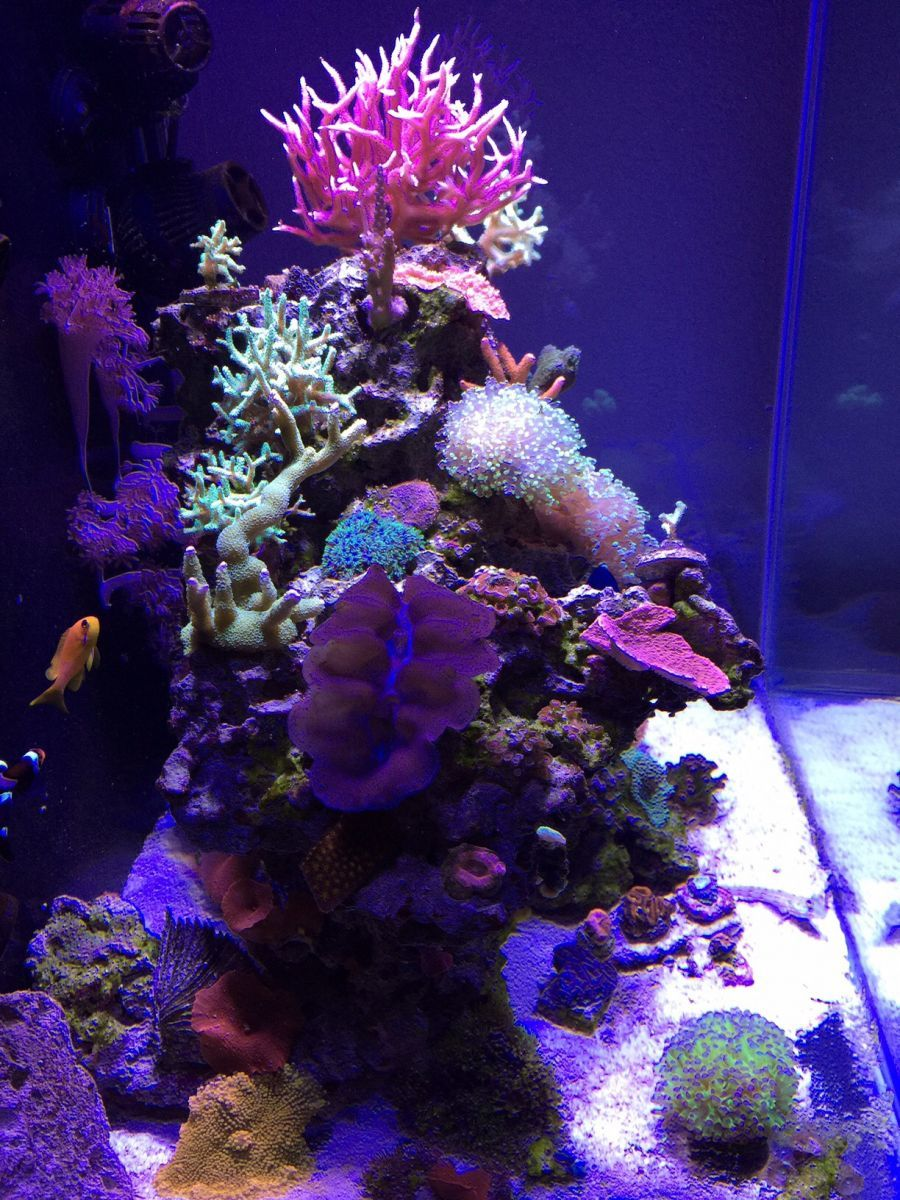 My 56 gallon mix reef