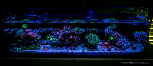 12G Long Nano Reef (2.5 Years Old)