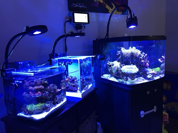 Reef tanks controlled by reef pi
