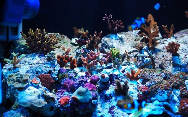 some of the corals in my tank