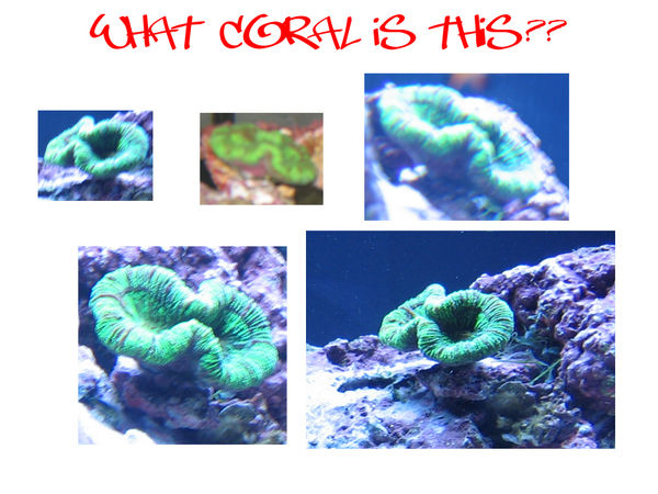 ??? coral