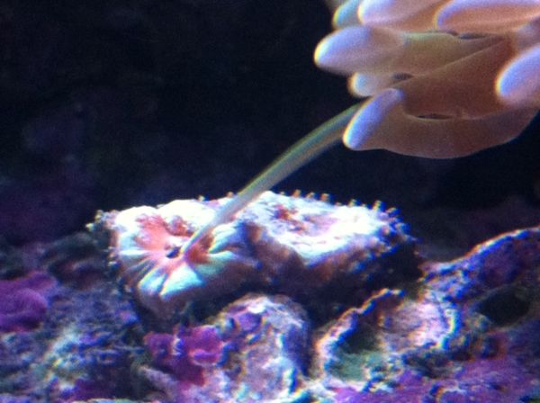 Acan eating hammer