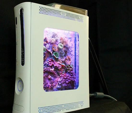 XBoX360+ Reef = AWESOME PICO!