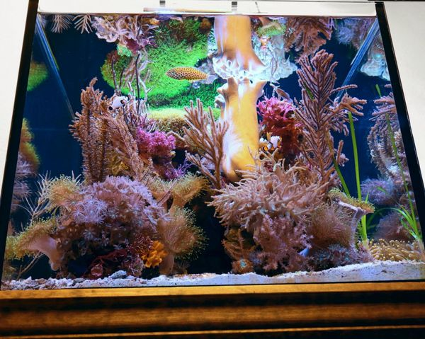 50 gallon soft reef