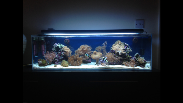 my soft coral reef in progress 12 months
