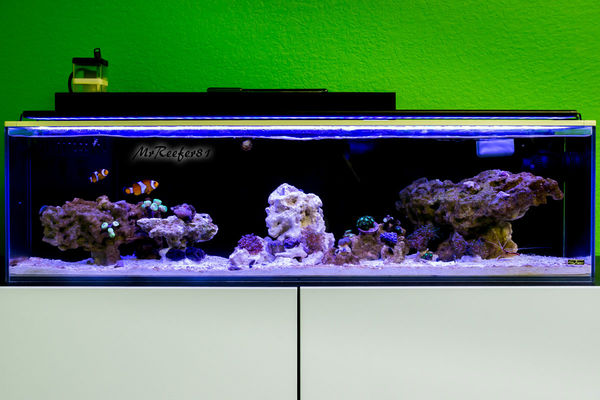 "FTS 7-24-14, New ""Fairy Tale"" scape and added corals for the first time"