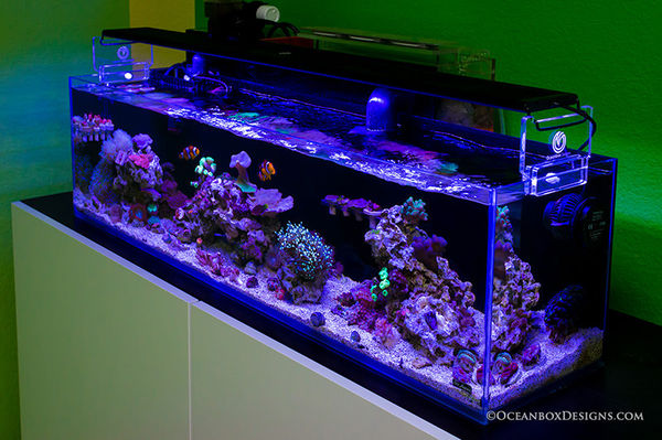 Mr Aqua 12L Nano Reef w/Oceanbox Designs NANO REVOLUTION POB Sump