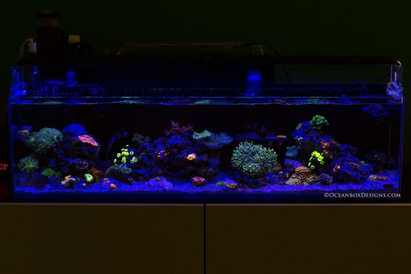 12G Long Oceanbox Reef™ - July FTS