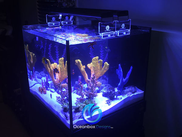 SCA 50G Rimless Starphire Cube w/Oceanbox Designs Lightmaxx Riser