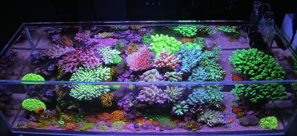 Iwagumi Reef - Top Down