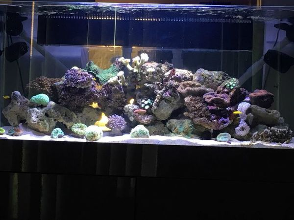 90 gallon reef tank 2 months old